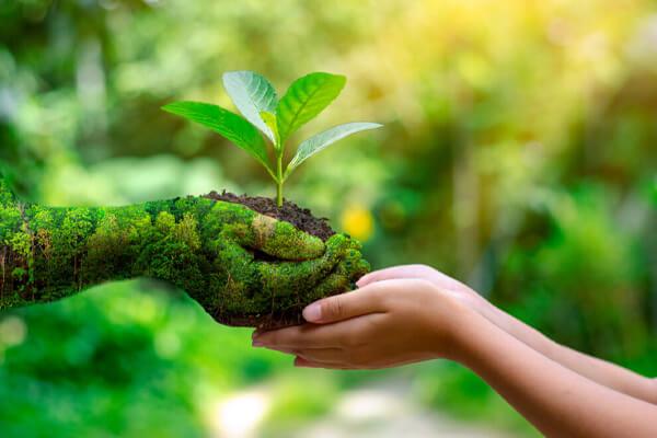 Stöd Green Agreement - World Forest Forum
