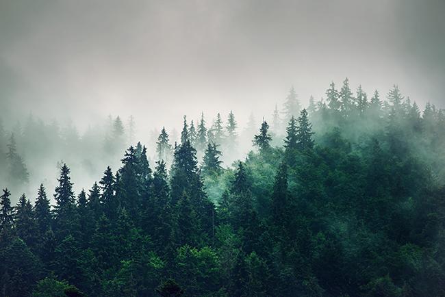 Så binder skogen våra koldioxidutsläpp - World Forest Forum