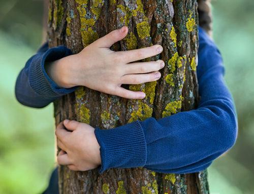 Skogsbrukets framtid