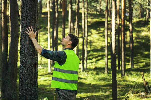 skogen viktig naturresurs